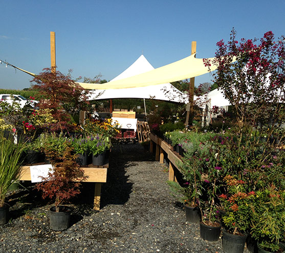 Nursery Garden Supplies Frederick Maryland Barricks Garden