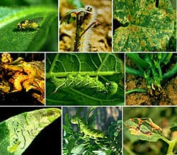 Weed & Pest Control | Frederick Maryland